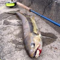 Arakawa_salmon_2
